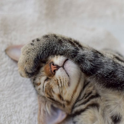 Cat sleeping with paw on face