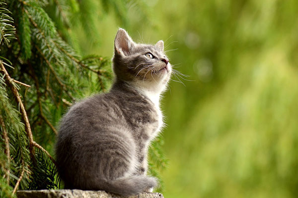 Cat looking up in forest