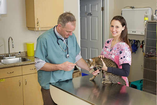 Doctor examining a cat