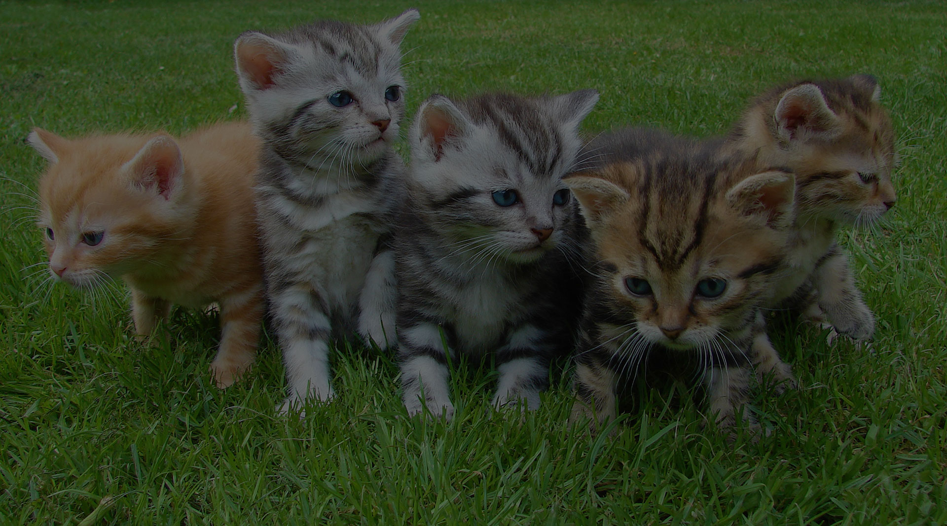 Kittens in the grass together